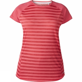 Berghaus Berghaus Womens Stripe Short Sleeve Crew Baselayer Hot Raspberry Stripe/Hotraspby