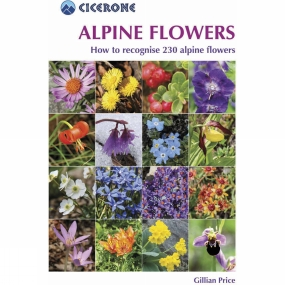 alpine-flowers