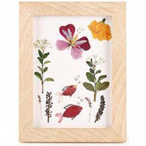 Kikkerland Huckleberry Pressed Flower Frame Art